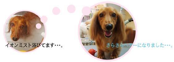 dogspa_image06