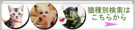 猫種別検索バナー
