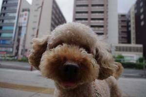 犬kuraホテル
