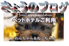ペットホテルの様子
